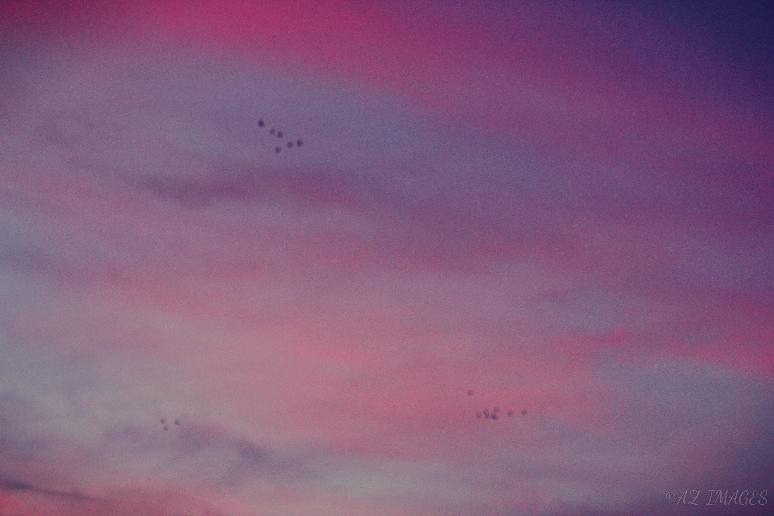 skybirdstxt3